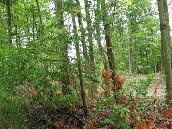 Timbers19